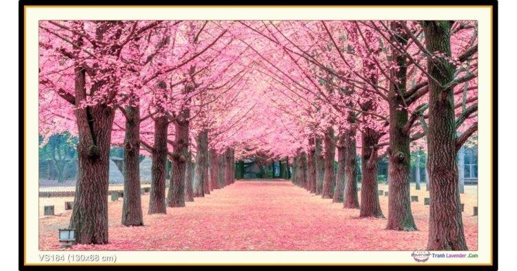 Tranh đính đá Rừng hoa anh đào (khổ lớn) ✅130x68 cm -️ VS184