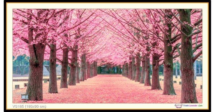 Tranh đính đá Rừng hoa anh đào (khổ rất lớn) ✅180x90 cm -️ VS185